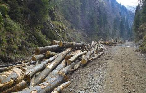 lemne abandonate