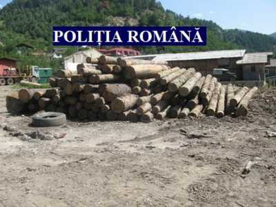 lemne politia 03_resize