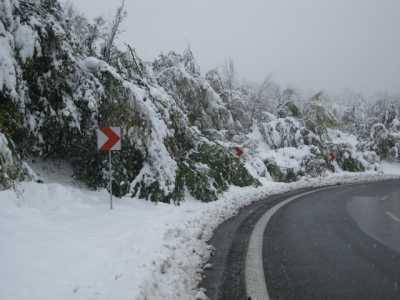 iarna copaci rupti 01