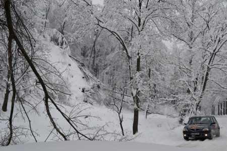 iarna copaci rupti 02