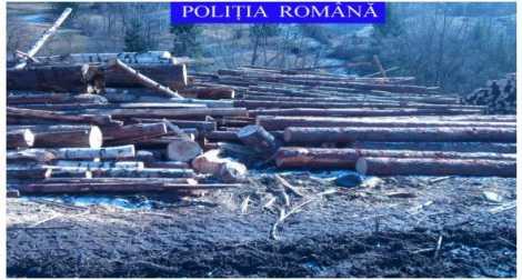 lemn confiscat 01