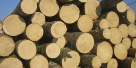 lemne stiva