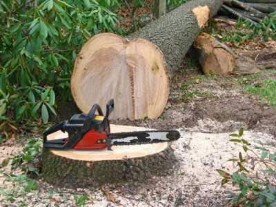 lemne drujba
