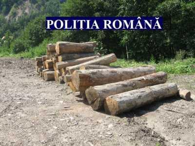 lemne politia 01