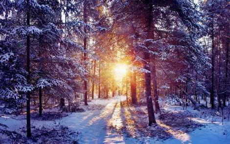 iarna frumos