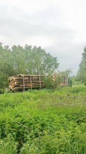botosani lemn ilegal frontiera