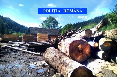 lemn confiscat 03