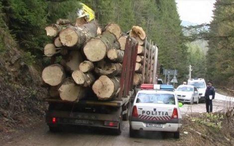 lemne-camion-04