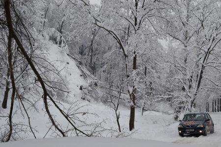 iarna-copaci-rupti-02