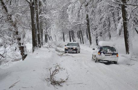 iarna-copaci-rupti-03